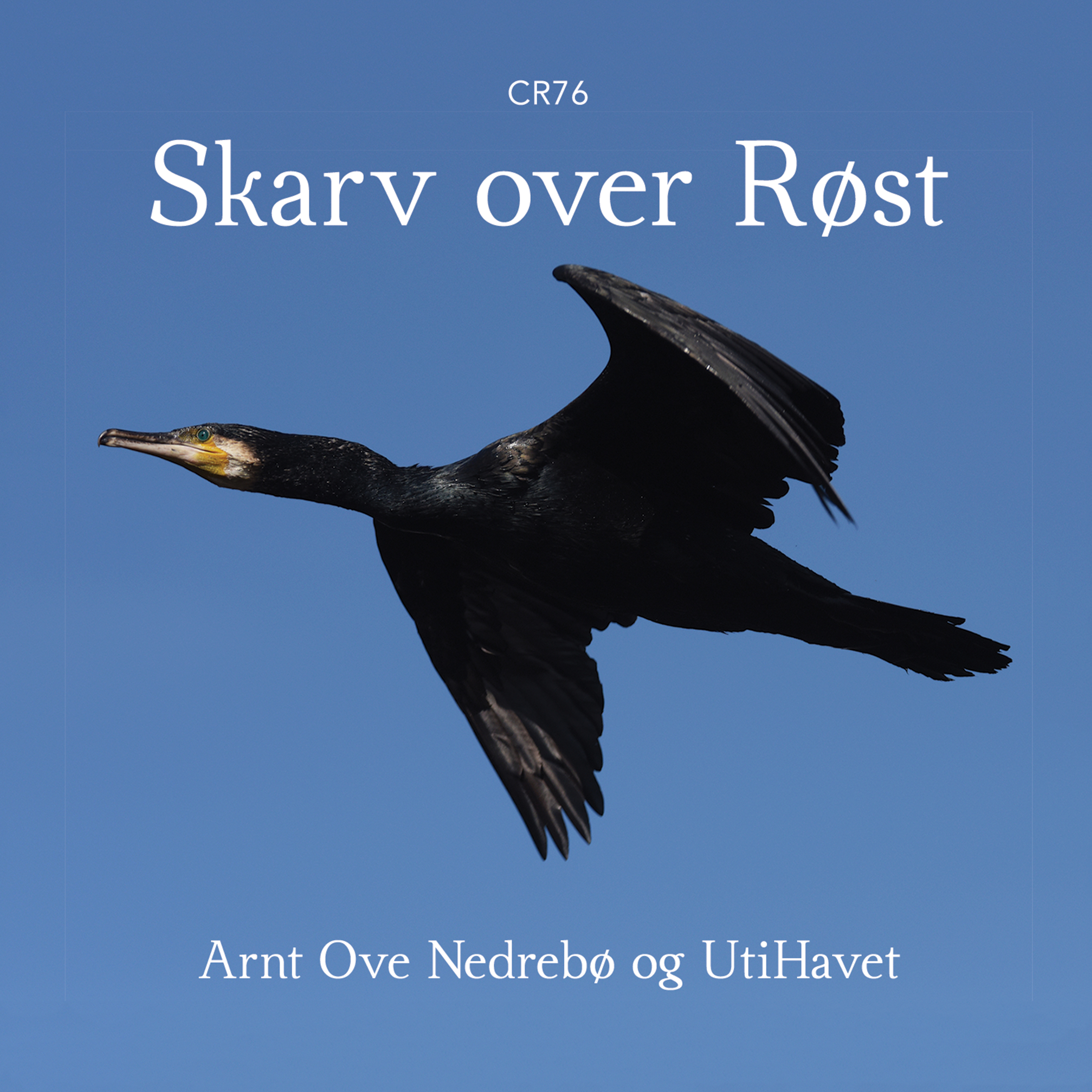 Skarv over Røst